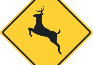 Blog - Animal Collisions